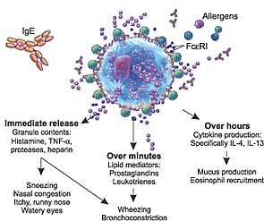 Understanding the complications of mast cell activation