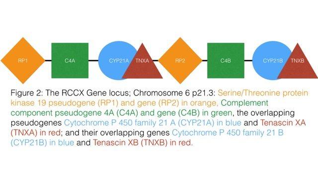 Tenascin-X (TenX) Ehlers-Danlos syndrome